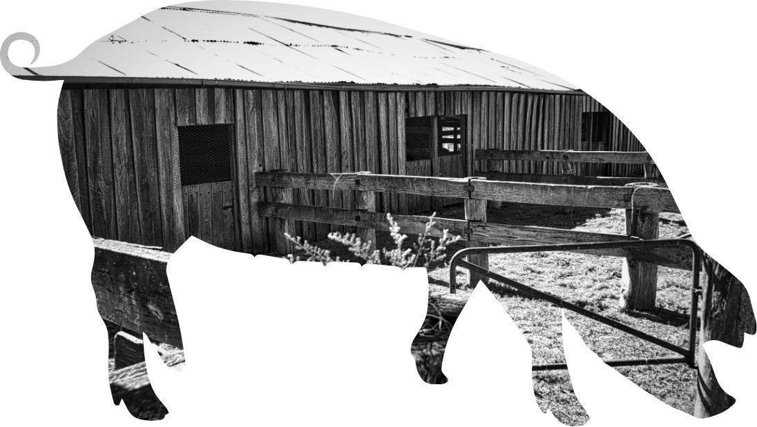 Granjas Duroc - Cerdo Duroc